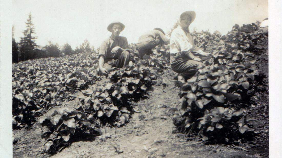 Cindy Mochizuki's grandmother's berry farm in Langley, 1941. Photo courtesy of artist.