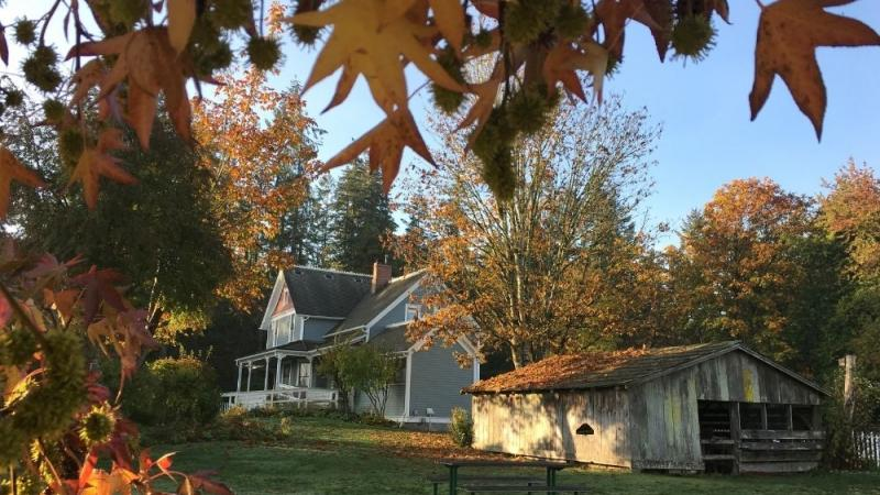 Farmhouse behind fall leaves
