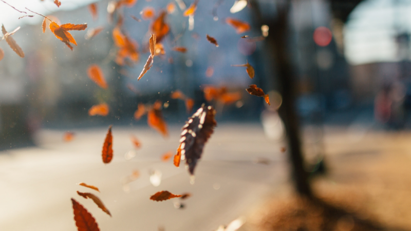 A left hand throws fall leaves on a sunny day