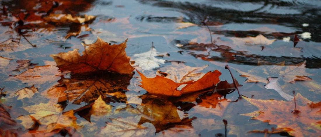 Fall leaves in a rain puddle.