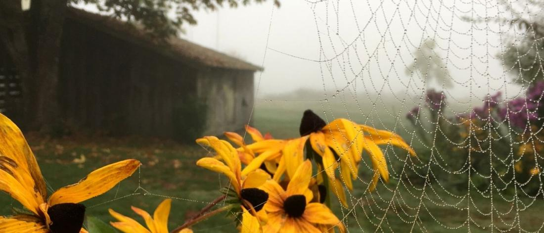 Stewart Farm with fog and spiderwebs